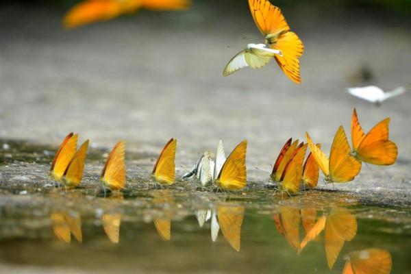 Ngất ngây thiên đường bướm3