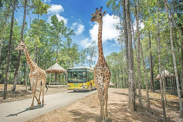 Sở thú Safari2
