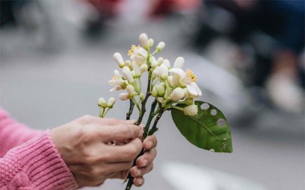 Tháng 3 mùa hoa bưởi10