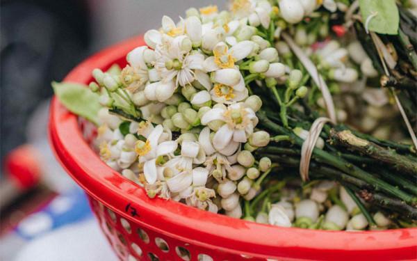 Tìm về mùa hoa bưởi tháng 3 ở đất Hà Nội
