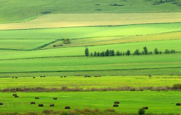 Thảo nguyên Hulun Buir, Mông Cổ2