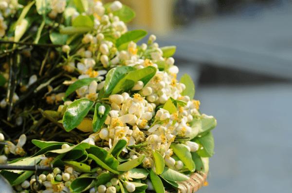 tháng 3 mùa hoa bưởi ở hà nội4