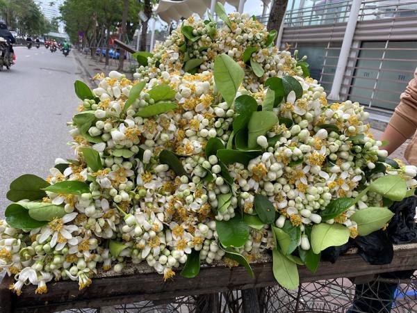 tháng 3 mùa hoa bưởi ở hà nội5