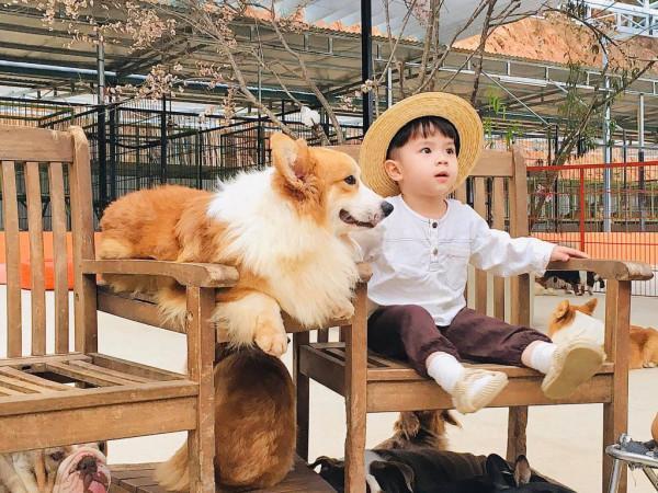 Nông trại cún Puppy-farm