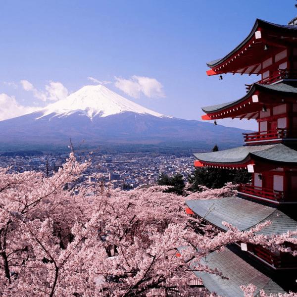 mùa hoa anh đào Sakura1
