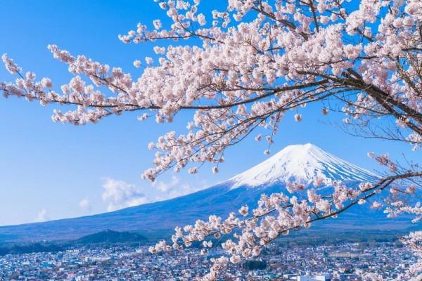 mùa hoa anh đào Sakura2