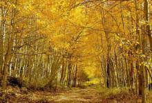 Những khu rừng mang màu cổ tích bậc nhất thế giới