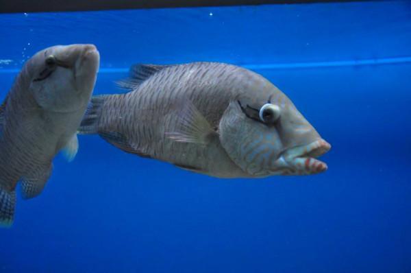 Viện Hải dương học Nha Trang3