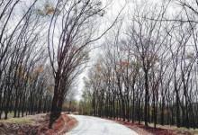 Vẻ đẹp mê hồn của Bình Phước vào mùa lá rụng