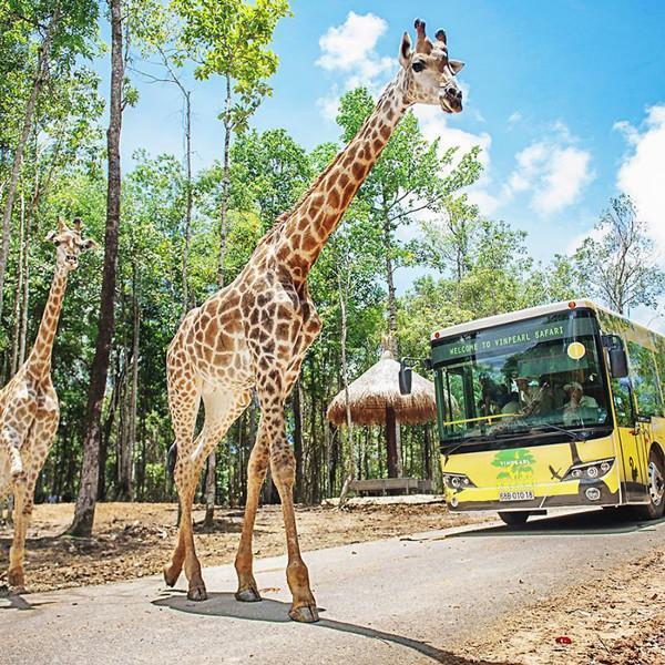 Tham quan Vinpearl Safari1