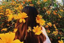 Không thể nào ngồi yên khi mùa hoa dã quỳ đã nở rộ
