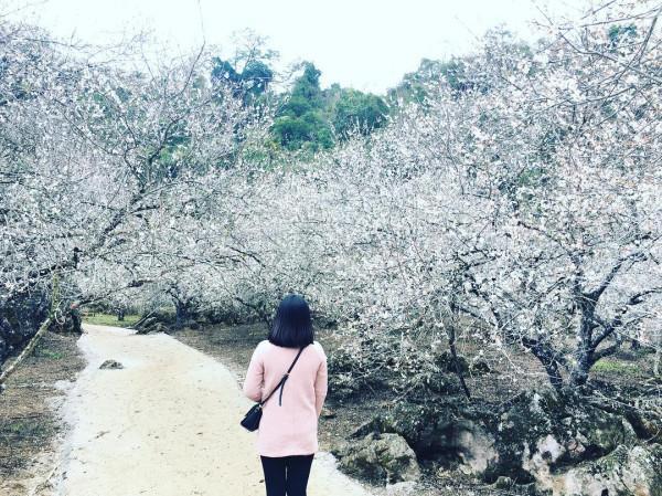 Vé máy bay đi Hà Nội khám phá thiên đường hoa Mộc Châu