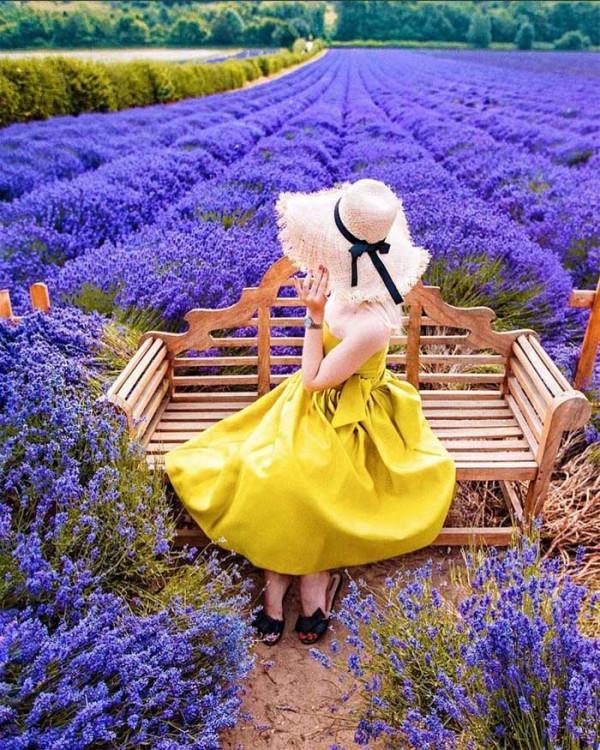 123ve-hoa-lavender-da-lat-no-thang-6-7