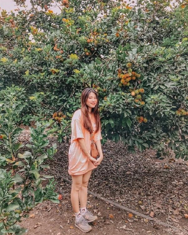 Tận hưởng những khu vườn trái cây siêu ngọt ở Đông Nam Bộ